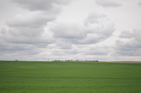 Kansas new wheat.jpg