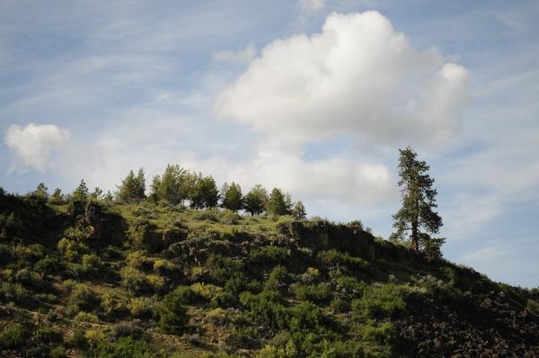 Tree on hilltop.jpg