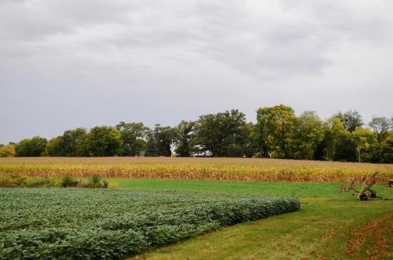 Field in town.jpg