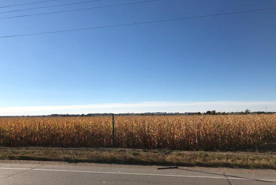 Eastern Colorado Cornfield