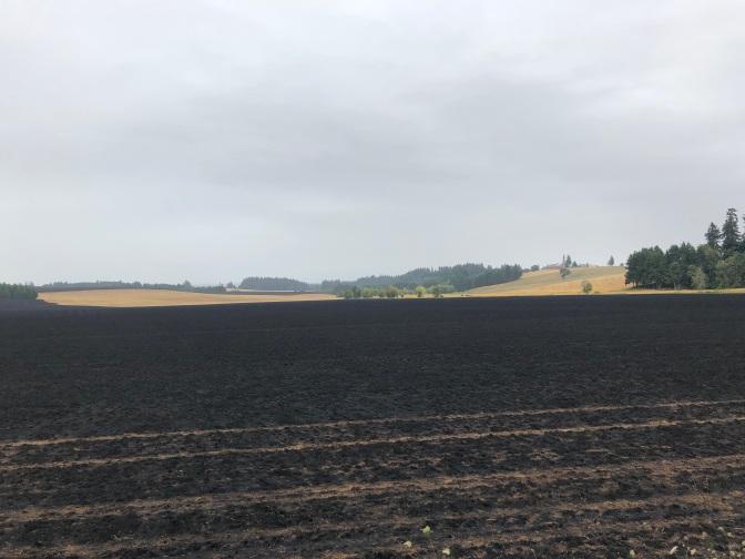 Burnt Fields Stayton